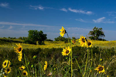 Photograph - Sunflowers And More Sunflowers by Nathan Hillis
