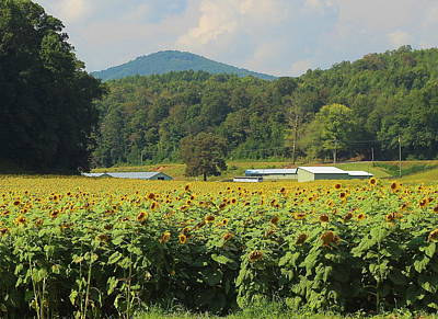 Sunflowers And Mountain View 2 Art Print