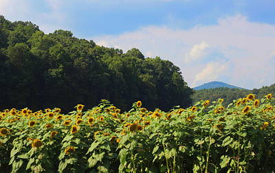 Sunflowers And Mountain View Art Print