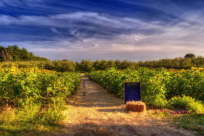 Farm Scenes Photograph - Sunflowers And Orchards  by Joann Vitali
