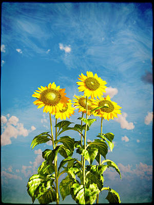 Digital Art - Sunflowers And The Sky... by Tim Fillingim