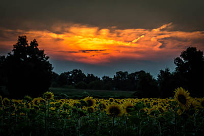 Photograph - Sunflowers At Sunset by Sara Frank