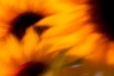 Photograph - Sunflowers Blowing In The Wind by Kunal Mehra
