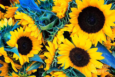 Photograph - Sunflowers by Colleen Kammerer