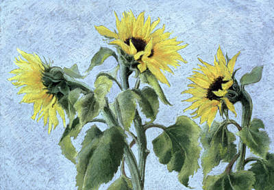 Sunflowers Art Print by Cristiana Angelini