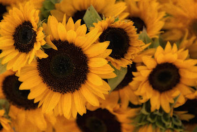 Photograph - Sunflowers Img 6541 by Greg Kluempers