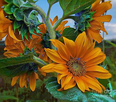 Sunflowers In A Bunch Art Print by John  Kolenberg