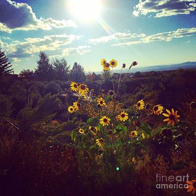 Photograph - Sunflowers In Sun Light by LeLa Becker