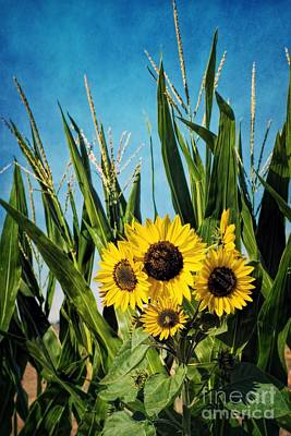 Photograph - Sunflowers In The Corn Field by Peggy Hughes