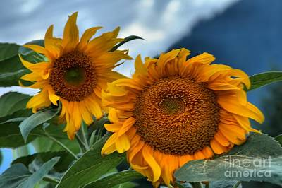 Photograph - Sunflowers In The Wind by Adam Jewell