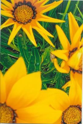Sunflowers Medley Art Print by Robert Bray
