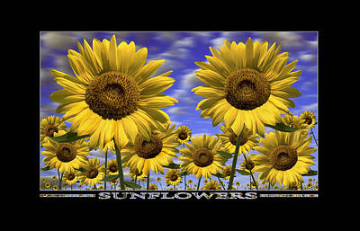 Sunflowers Royalty-Free and Rights-Managed Images - Sunflowers Show Print by Mike McGlothlen
