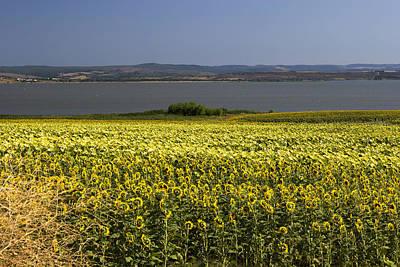 Photograph - Sunflowers Near The Sea by Radoslav Nedelchev