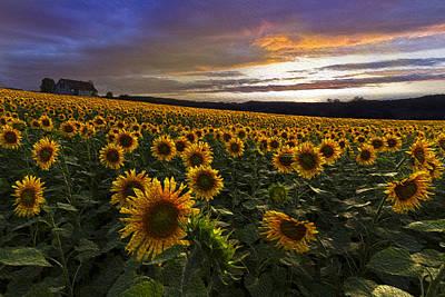 Sunflowers Oil Painting Art Print by Debra and Dave Vanderlaan