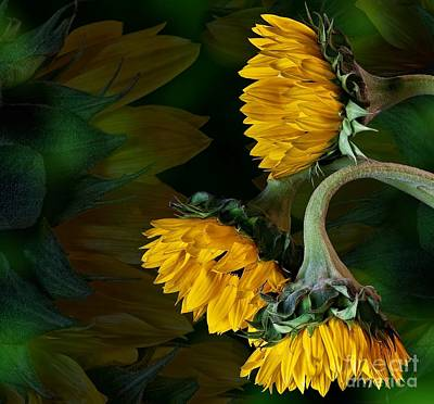 Art Print featuring the photograph Sunflowers by Shirley Mangini