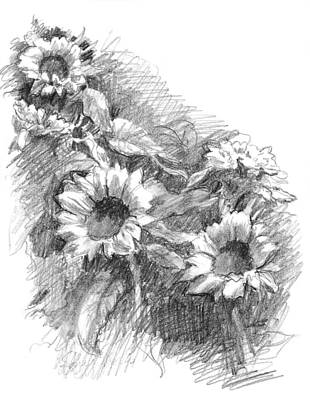 Still Life Drawings - Sunflowers by Sarah Parks