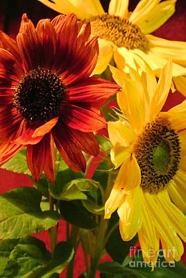 Photograph - Sunflowers by Sharron Cuthbertson