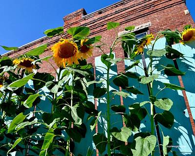 Photograph - Sunflowers by Susie Loechler