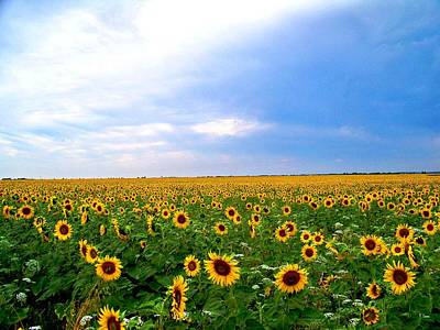 Photograph - Sunflowers by Thomas Leon