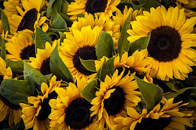 Photograph - Sunflowers by Wayne Meyer