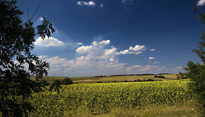 Photograph - Sunflowers With Cloudy Blue Sky by Radoslav Nedelchev