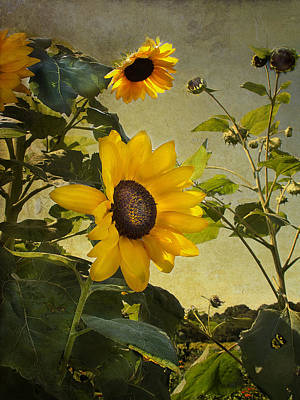 Photograph - Sunflowers With Texture by Sandra Anderson