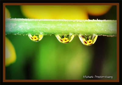 Photograph - Sunfowers by Michaela Preston