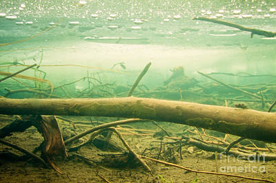 Surrealism Royalty-Free and Rights-Managed Images - Sunken wood under the ice in frozen beaver pond by Stephan Pietzko