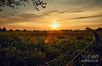 Zaun Photograph - Sunkiss by Martin Slotta