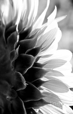 Sunkissed In Black And White Print by Lee Craig