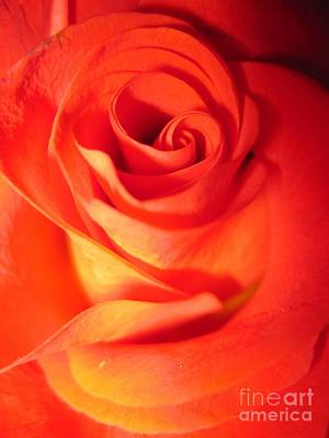 Sunkissed Orange Rose 10 Art Print