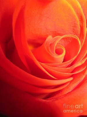 Photograph - Sunkissed Orange Rose 14 by Tara  Shalton