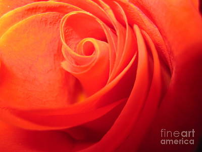 Photograph - Sunkissed Orange Rose 8 by Tara  Shalton