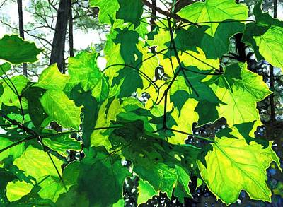 Painting - Sunlight And Shadows - Life's Patterns by Barbara Jewell