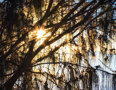 Photograph - Sunlight Burst Through Trees by Peta Thames