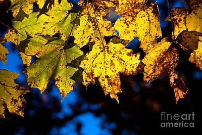 Wyalusing Photograph - Sunlight Falling Thru by Andrew Slater