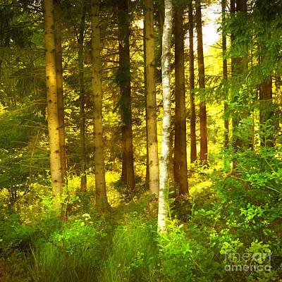 Photograph - Sunlight Forest by Lutz Baar