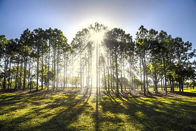Sunlight In The Trees Art Print
