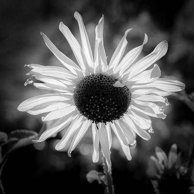 Photograph - Sunlight In White by John Brink