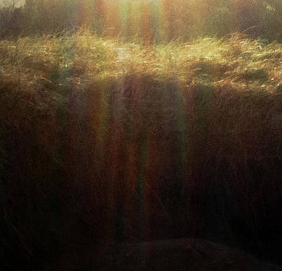 Photograph - Sunlight On Beach Grass by Amanda Holmes Tzafrir