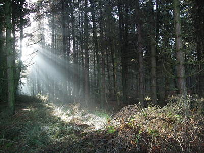 Art Print featuring the photograph Sunlight On Cannock Chase by Jean Walker