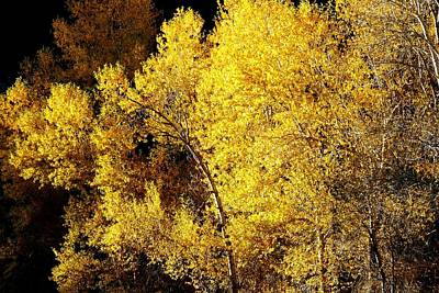 Photograph - Sunlight On Fall Foliage by Marilyn Burton