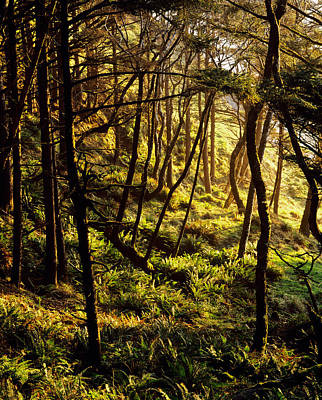 State Parks In Oregon Photograph - Sunlight On Fern Plants Growing In by Panoramic Images