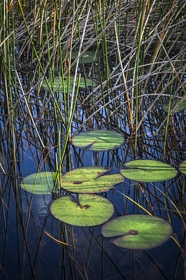 Photograph - Sunlight On The Lilypads by Debra and Dave Vanderlaan