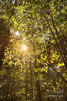 Sunlight Shining Through A Forest Canopy Art Print by Jonathan Welch