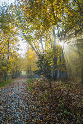 Sunlight Streaming Through The Trees Art Print by Jacques Laurent