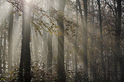 Bristol Photograph - Sunlight Through The Fog In The Woods by Carolyn Eaton