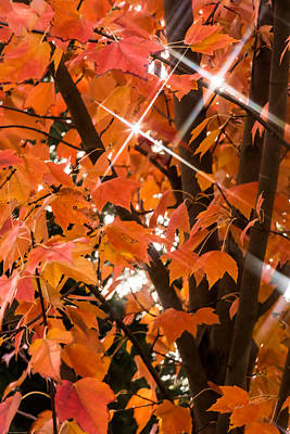 Photograph - Sunlight Through The Leaves by Mick Anderson