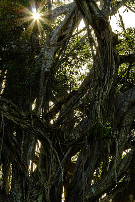 Photograph - Sunlight Through The Tangle by Ed Gleichman
