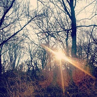 Cool Photograph - Sunlight Through The Trees by Genevieve Esson